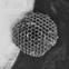 Vecmamma. 2012. Audekls, akrils, eļļa, iršu ligzdas, silikons. 120 x 120 cm